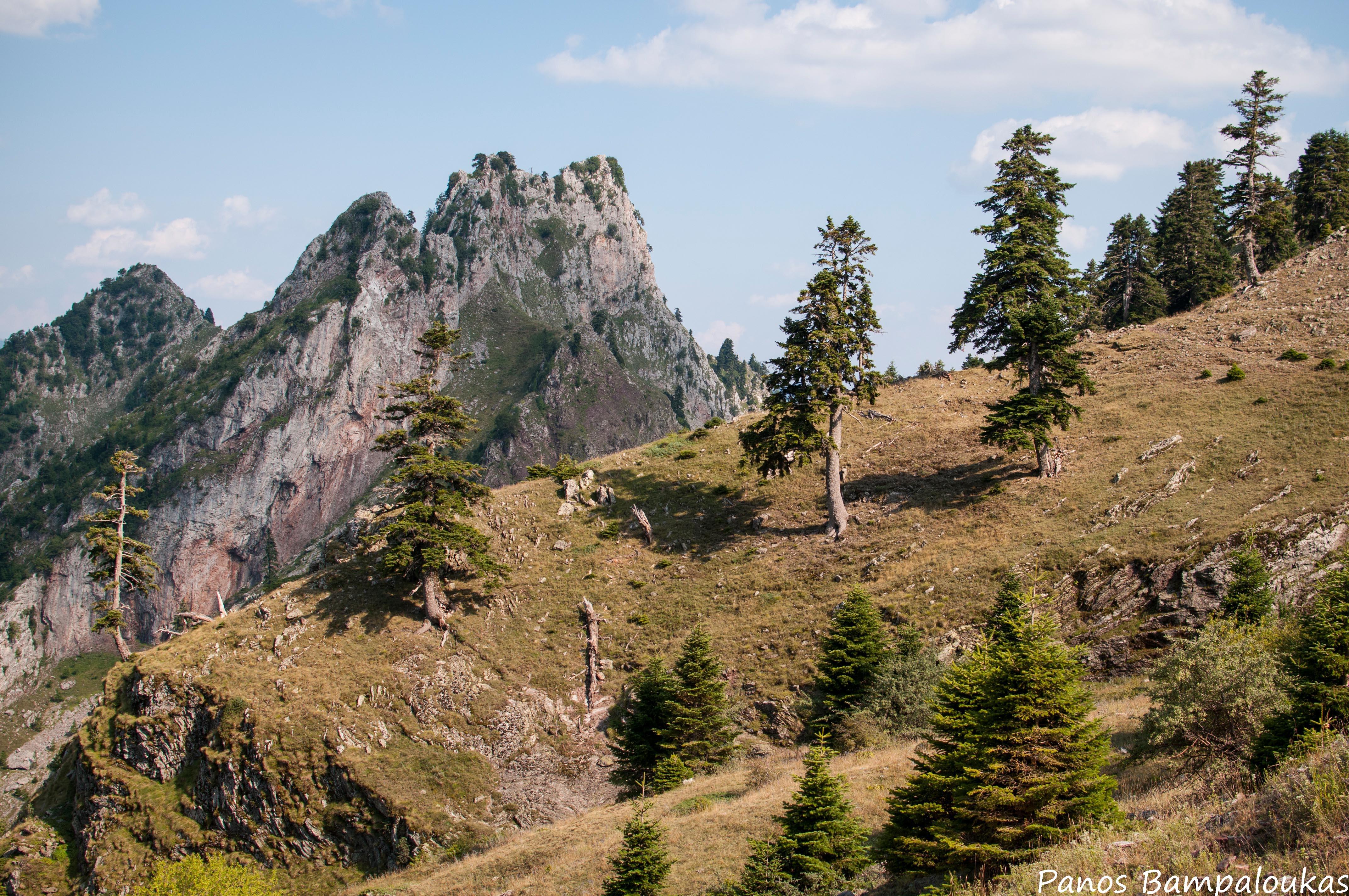 Κορυφή Σφενδάμι