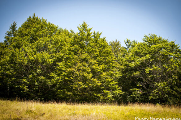 Φυλλοβόλο δάσος - Αυγό